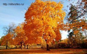 Мои стихи для вас. Осень